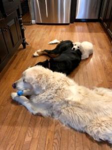Wyatt, Bella & Cooper cuddling!