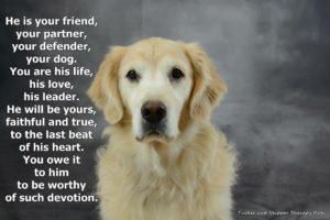 Kennel Friends