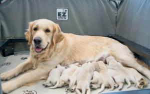 Nonna & Puppies