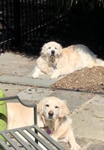 Daisy & Mercy