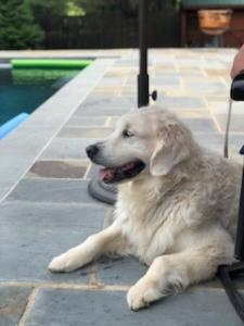 Wyatt relaxing by the pool