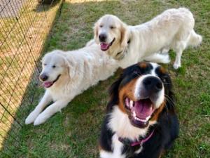 Bella & friends