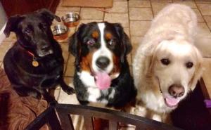 Three amigos!Luna, Bella in the middle, Wyatt