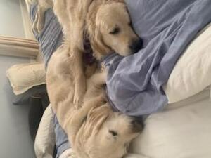 Benji and Daisy