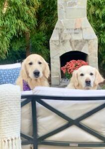 Daisy and Benji