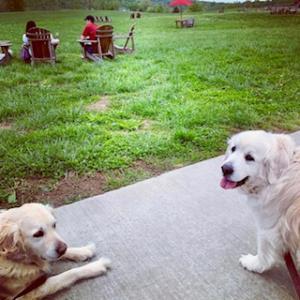 Daisy & her sister Mercy