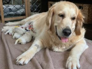 Nonna and her sweet pups
